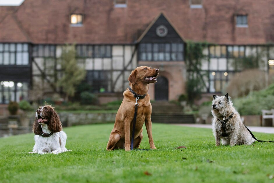Walkies at Wisley