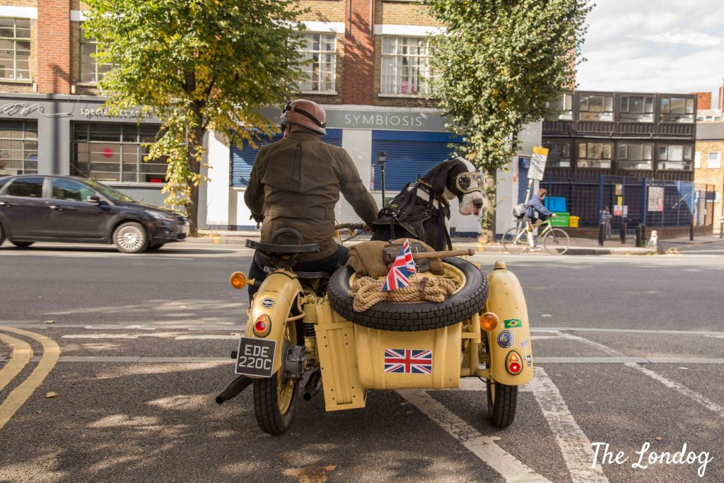 Dog on sidecar in Shoreditch