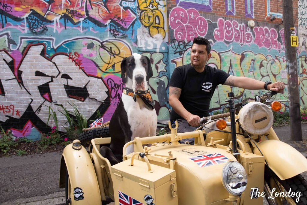 dog sits on side car near graffiti wall in London