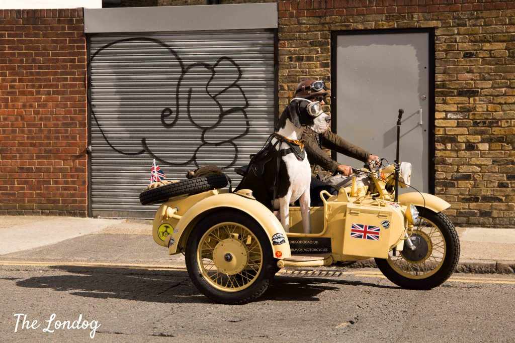Great Dane dog riding vintage sidecar in London