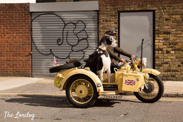 Great Dane dog riding vintage sidecar in London