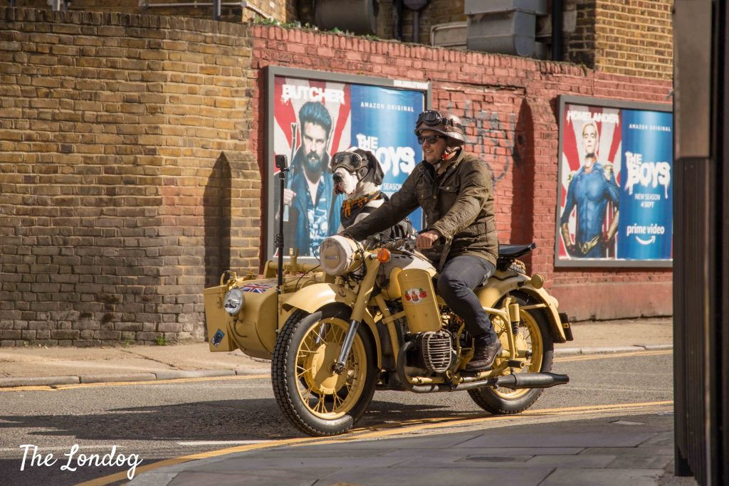 Great Dane dog riding a vintage sidecar on the streets of London passing by a brick wall