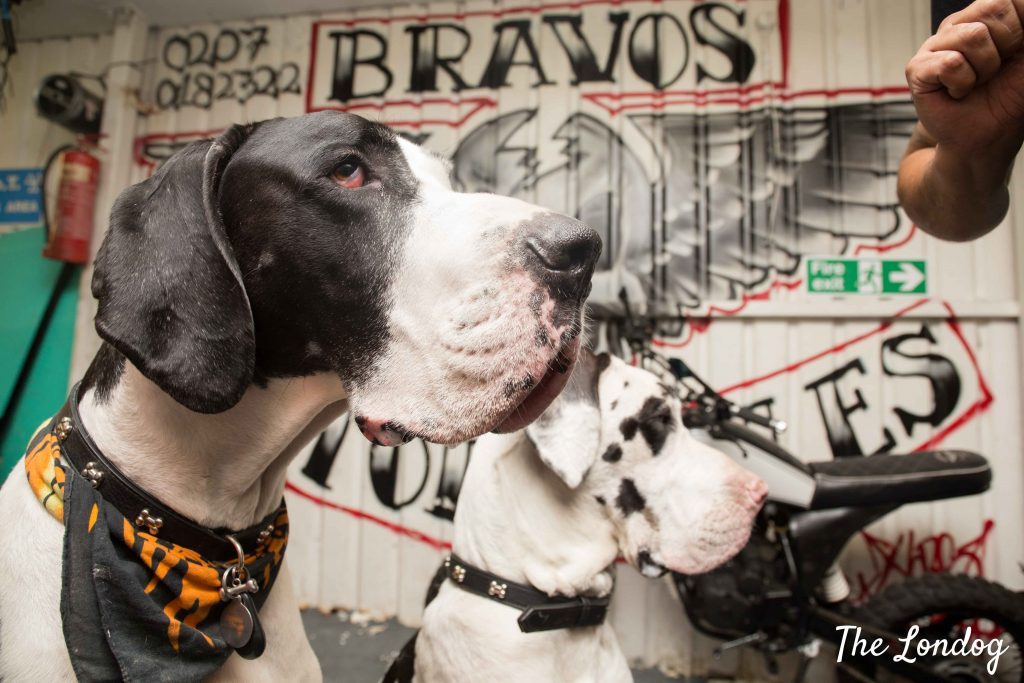 Great dane dogs at garage in London