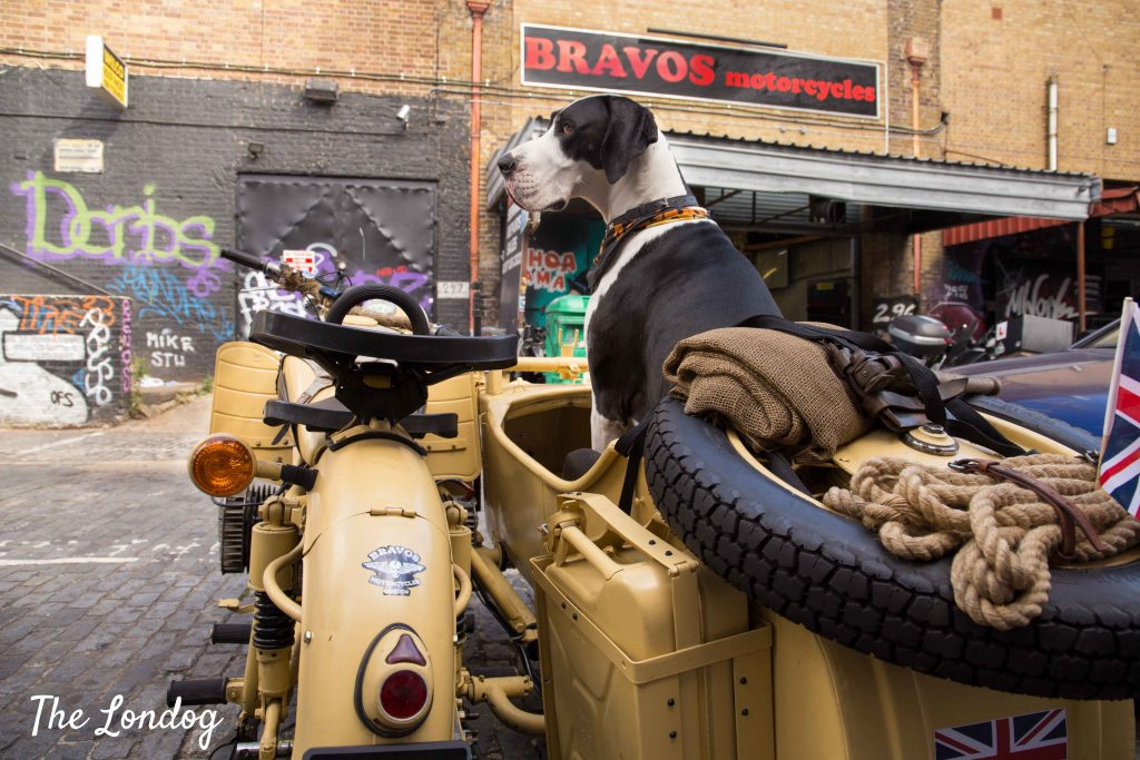 Black and white Great Dane sitting in vintage sidecar parked on East London street