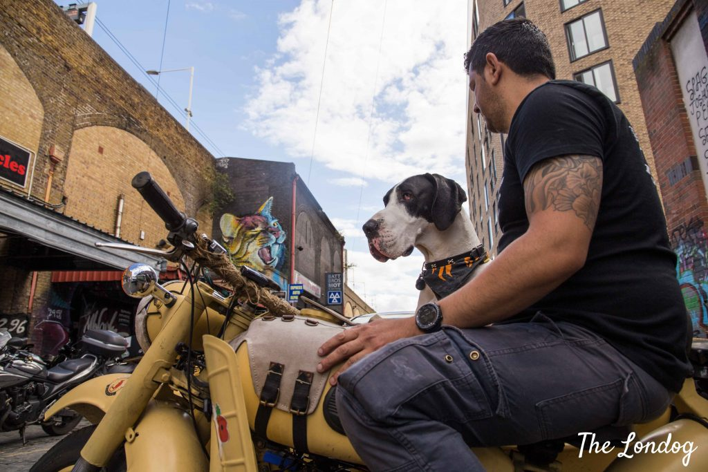 Dog on sidecar parked on East London street with man