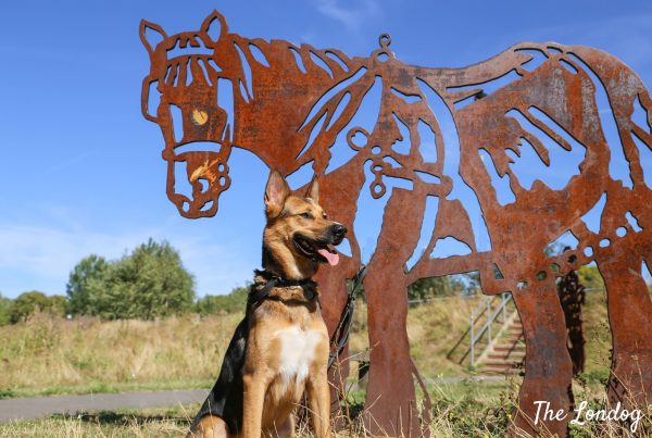 Dog at the park with horse statue saving the environment