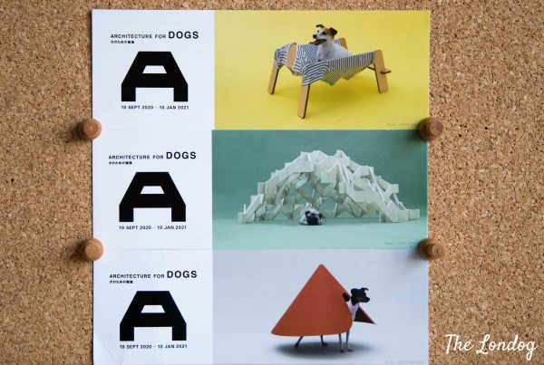 Cards of Architecture for Dogs exhibition showing dog houses