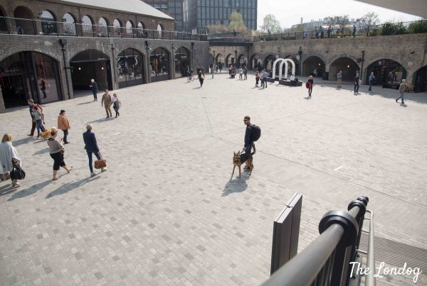 Dog visits Coal Drops Yard and its dog-friendly shops