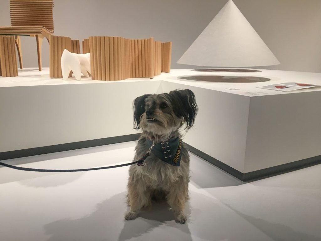 Dog sits next to dog houses at the Architecture for Dogs exhibition