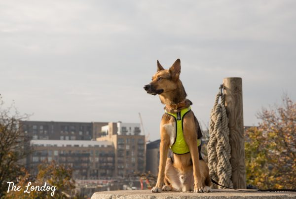Dog sits on pedestal during a dog walk on The Line art trail in East London