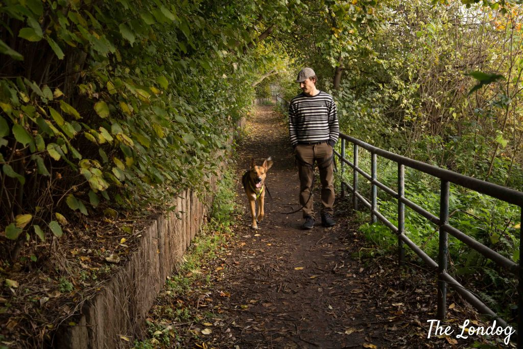 Dog walks on a path leading from Three Mills Wall to Abbey Mills Pumping Station in autumn